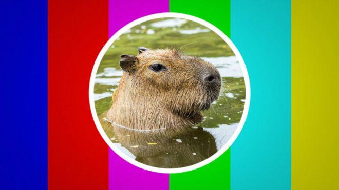 151106142050_capybara_logo_624x351_mattround_nocredit